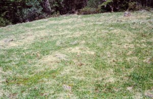 igure 5 meadow 2east to west