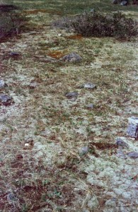 figure 9 lichen covered rock pavement