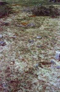 figure 9 lichen covered rock pavement