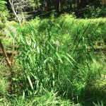 2012-06-01grass