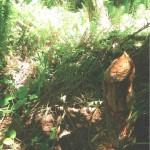 Evidence of beaver