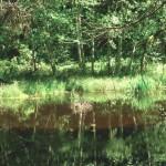 Reflection in bog