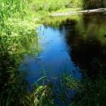 pondwestside