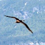 Albatross : All photos in the gallery are by Laas Parnell