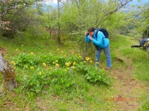 Marilyn Lambert and the Balsamroot