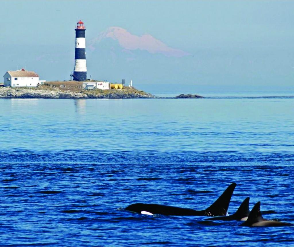 Orcinus orca&RR